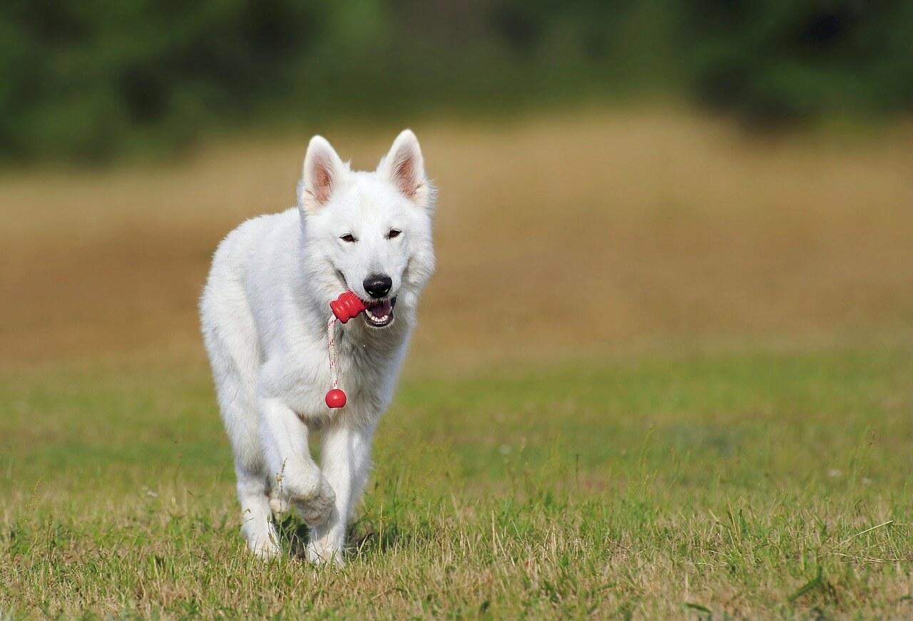 Bild von Hund bei Hundeerziehung