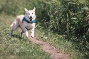 Rueckruftainig Hund