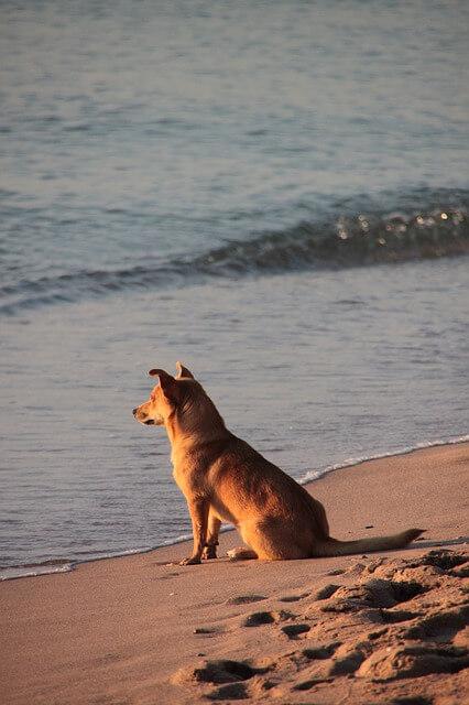 Ferien Hund Bild