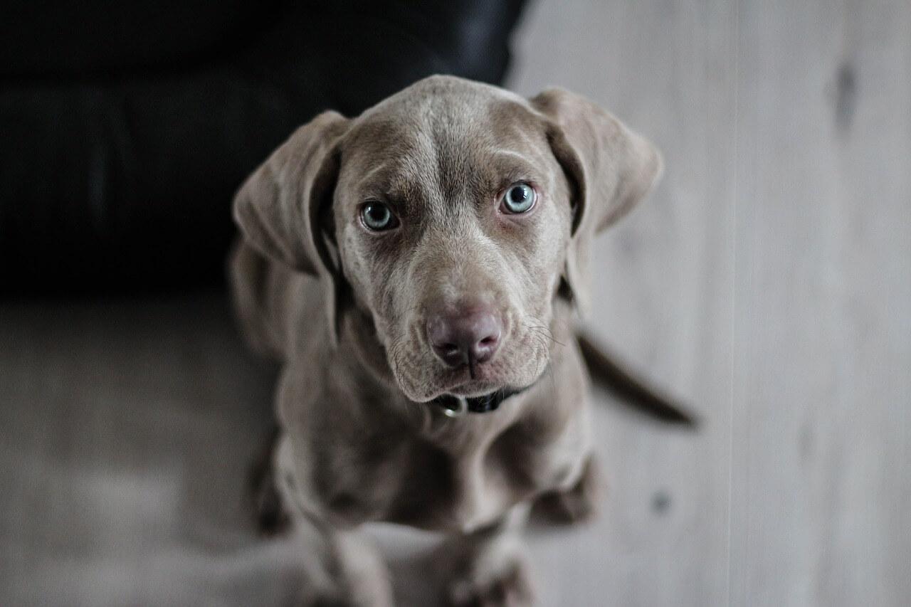 Bild von Hund beim Clickertraining