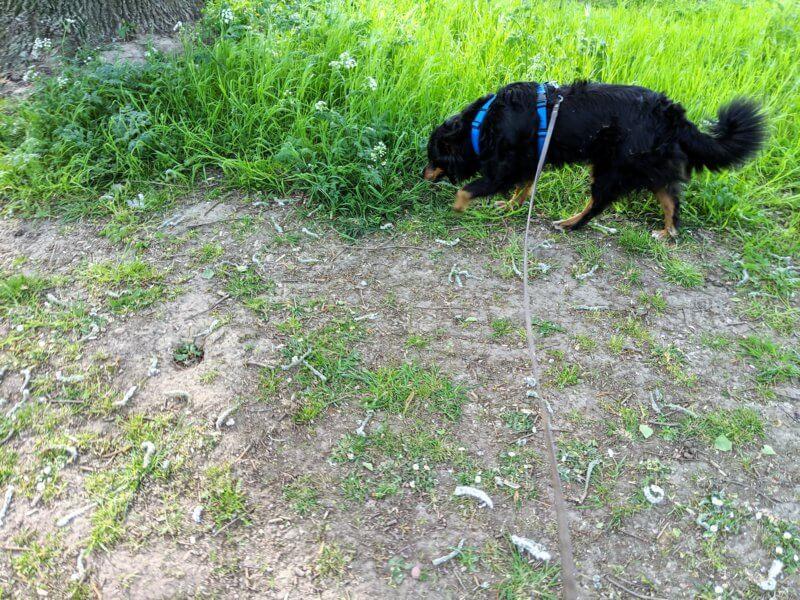 hund an leine gewoehnen bild