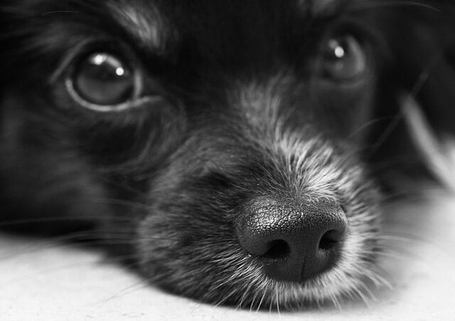 Hundewelpe zieht ein