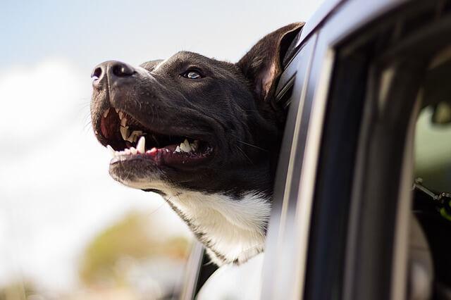 autofahren mit hund
