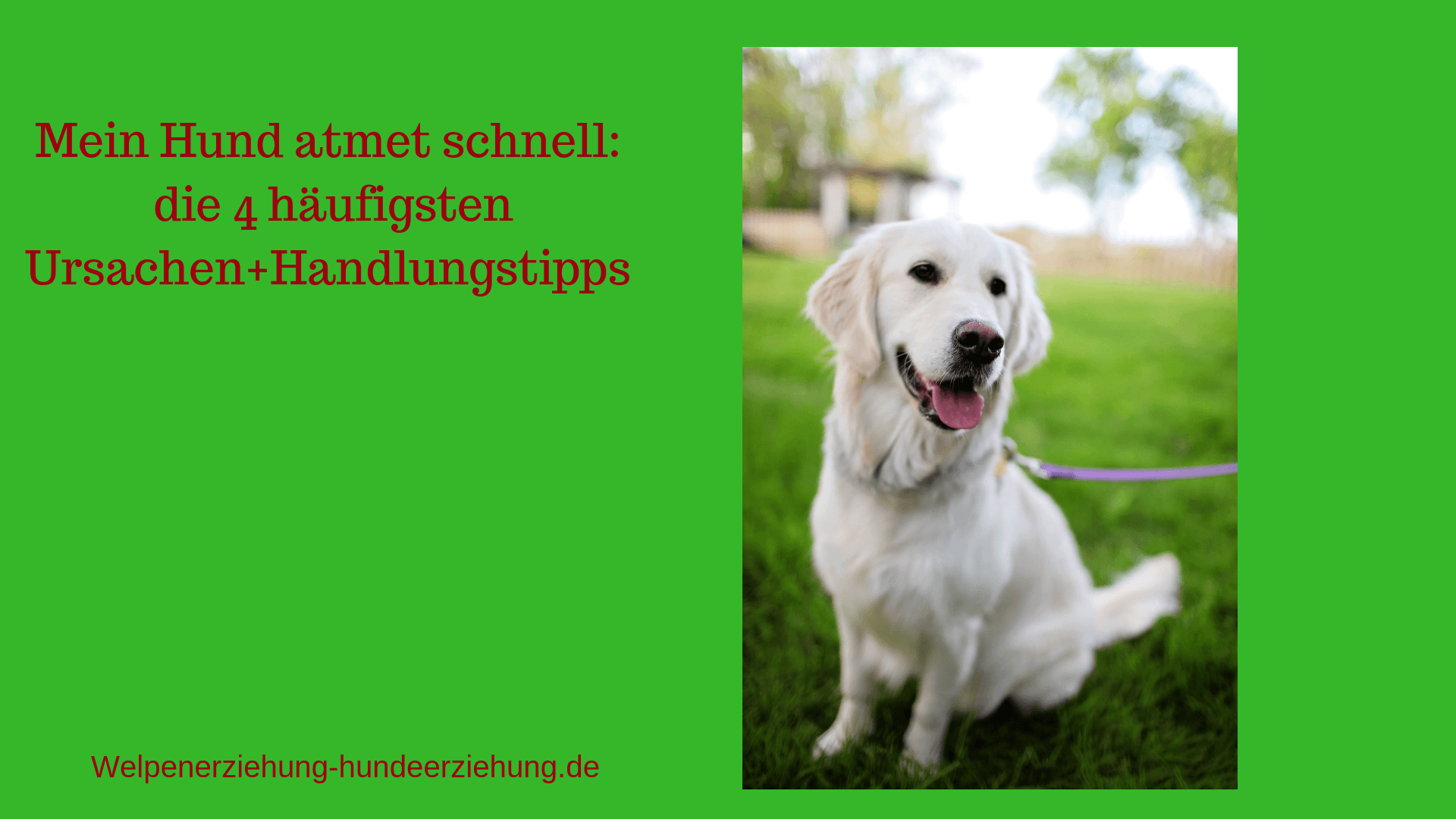 hund atmet schnell bild
