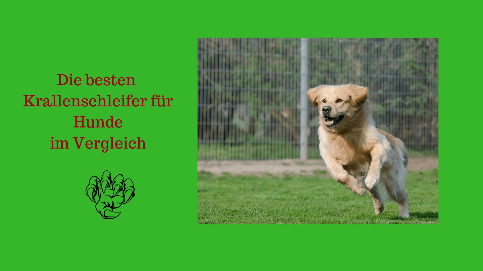 Krallenschleifer Hund Test