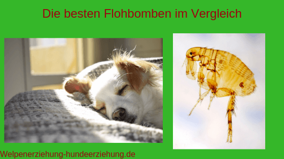 flohbombe test bild