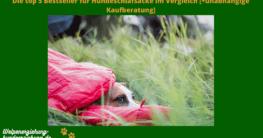 hundeschlafsack test
