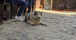 alter tauber hund bild