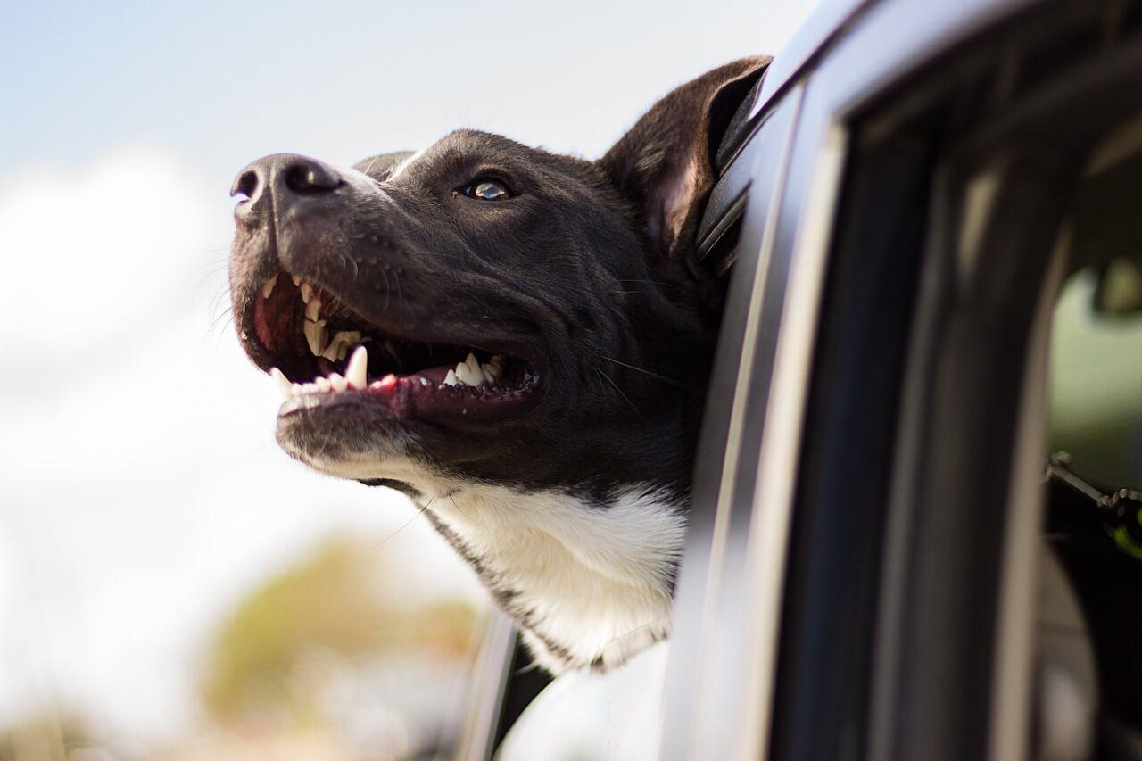 hund im auto bild