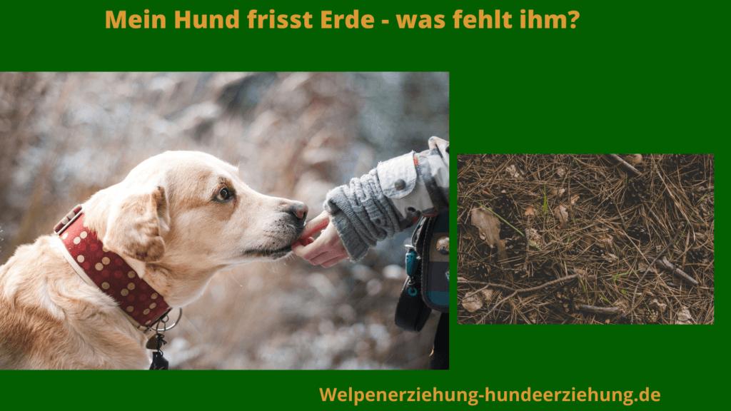 hund frisst Erde Bild