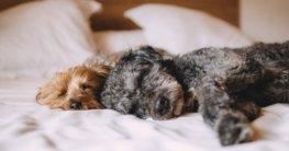 hund im bett schlafen lassen