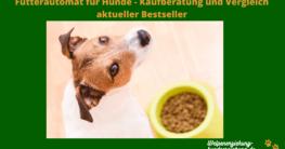 Futterautomat Hund Test