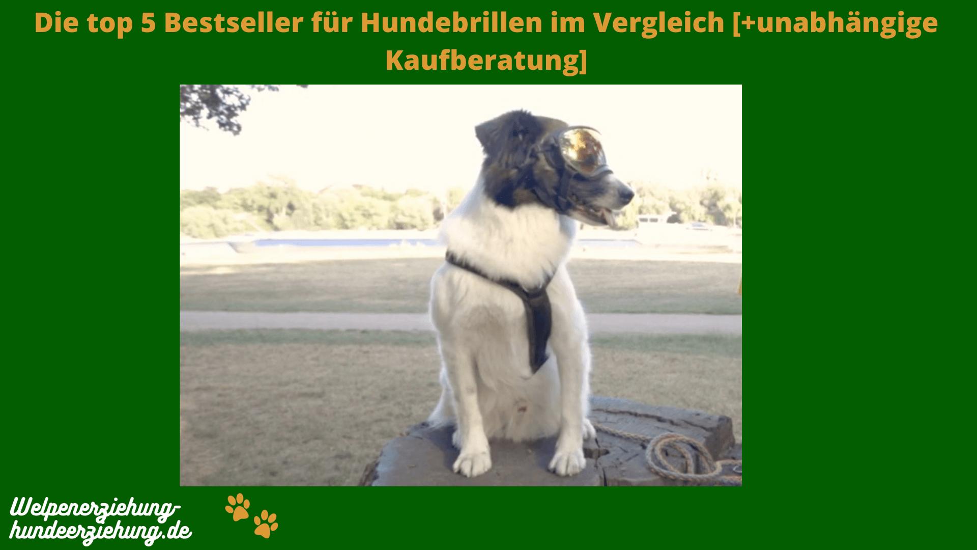 Hundebrille Test